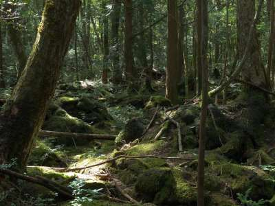 10 of the Most Mysterious Forests across the Globe
