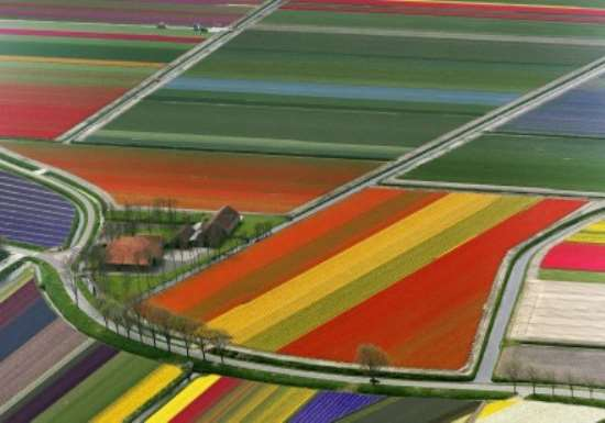 Driving through the Flowers: The Bollenstreek Road Trip, Netherlands