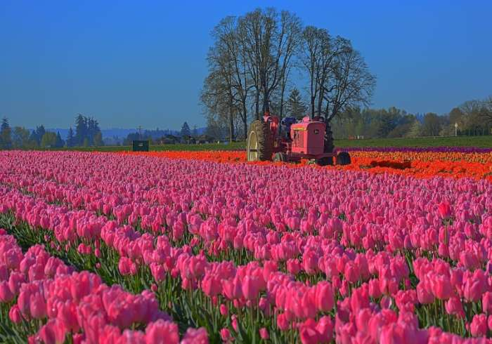 10 of the World's Most Impressive Flower Fields