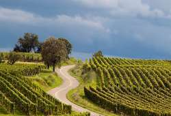 French Vineyard Driving Routes